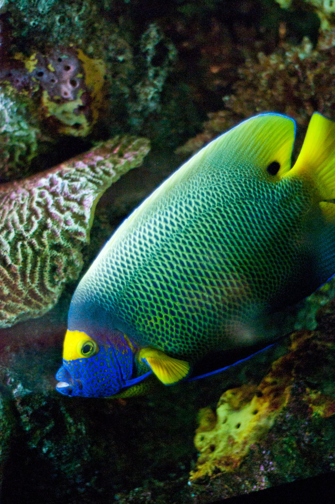 Baltimore Aquarium